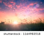 meadow autumn sunrise background | Shutterstock . vector #1164983518