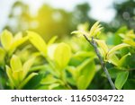 green leaf in nature view with... | Shutterstock . vector #1165034722