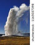 old faithful geyser erupting ...   Shutterstock . vector #1165037398
