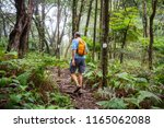 hiker on the trail in green... | Shutterstock . vector #1165062088
