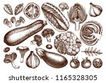 vector collection of hand... | Shutterstock .eps vector #1165328305
