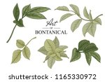 sketch floral botany collection.... | Shutterstock .eps vector #1165330972