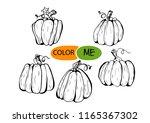 doodle pumpkin.vector paint... | Shutterstock .eps vector #1165367302