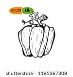 doodle pumpkin.vector paint... | Shutterstock .eps vector #1165367308
