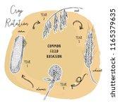 crop rotation is the practice... | Shutterstock .eps vector #1165379635