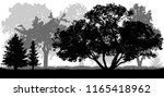 trees background  nature  park  ... | Shutterstock .eps vector #1165418962