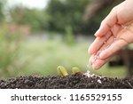 hand of a farmer giving... | Shutterstock . vector #1165529155