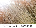 Haystack against the sun light. - stock photo