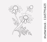 chamomile icon line element.... | Shutterstock .eps vector #1165791625