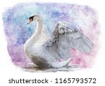 White Swan Sketch   Water Colo...