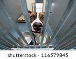 homeless dog behind bars in an... | Shutterstock . vector #116579845