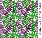 fern frond herbs  tropical... | Shutterstock .eps vector #1165911478
