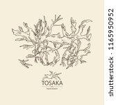tosaka  laminaria seaweed  sea... | Shutterstock .eps vector #1165950952