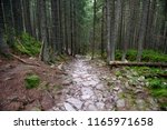 A Narrow Path Made Of Stones I...