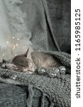 Stock photo cute gray kitten is sleeping on the bed the background is a bokeh of christmas lights the concept 1165985125