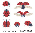 Stock vector insect ladybug set of seven vector beetles of different angles on a transparent background 1166026762