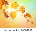 autumn falling leaves on... | Shutterstock . vector #116604268