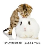 Stock photo kitten and rabbit isolated on white background 116617438