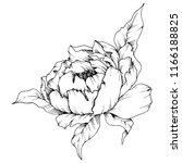 wildflower peony in a vector... | Shutterstock .eps vector #1166188825