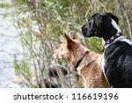 two dogs looking out at a lake - stock photo