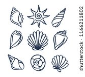 hand drawn sea shells set.... | Shutterstock .eps vector #1166211802