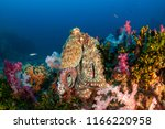a large octopus sitting on top... | Shutterstock . vector #1166220958