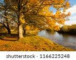 beautiful  golden autumn... | Shutterstock . vector #1166225248