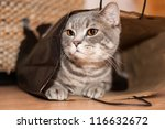 A Tabby Cat Sits Inside Of A...