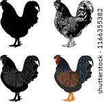 hen silhouette sketch and... | Shutterstock .eps vector #1166355382