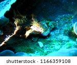 similan island under water... | Shutterstock . vector #1166359108