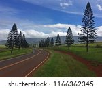 Row of Pine Trees on Hwy 440, Lanai, Hawaii