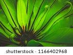 freshness green leaf of... | Shutterstock . vector #1166402968