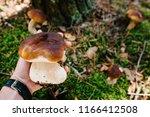 White Mushroom In The Hands Of...