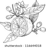 orange blossom flower free vector art 11844 free downloads