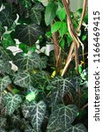 a wall of common ivy. usuable... | Shutterstock . vector #1166469415