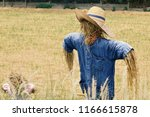 Scarecrow In Rice Field