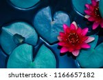 Stock photo red lotus water lily blooming on water surface and dark blue leaves toned purity nature background 1166657182