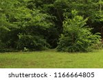 green field with trees | Shutterstock . vector #1166664805