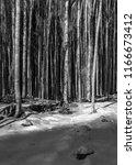 beech forest. alpago  italy.... | Shutterstock . vector #1166673412