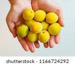 harvest of ume fruits in...   Shutterstock . vector #1166724292