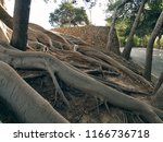 the mighty roots of the tree...   Shutterstock . vector #1166736718