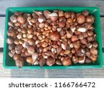 onion background. brown.... | Shutterstock . vector #1166766472
