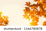 yellow maple leaves on the... | Shutterstock . vector #1166780878