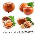 hazelnuts collection isolated... | Shutterstock . vector #1166798275