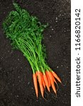 carrots with green leaves on a... | Shutterstock . vector #1166820142