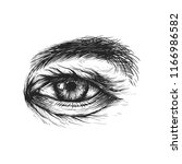 vector ink illustration of... | Shutterstock .eps vector #1166986582