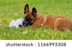 puppy playing with a shoe   Shutterstock . vector #1166993308