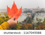 hand hold red maple leaf with... | Shutterstock . vector #1167045088