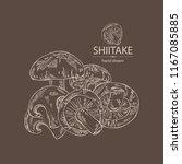 shiitake  mushroom and a bit of ... | Shutterstock .eps vector #1167085885