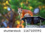 squirrel on the chimney. | Shutterstock . vector #1167105592